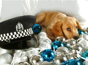 03 Police puppy dog Fern with police hat