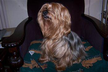 Blue - The Greyfriars Bobby Dog