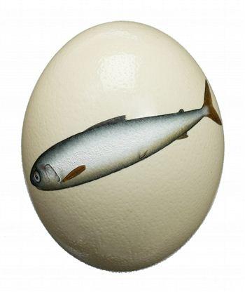 Donald Provan Egg