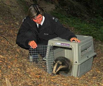 Louise Seddon with the badger