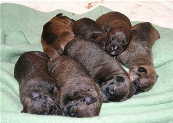 Abandoned Pups