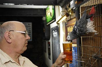 Basil enjoys a pint with owner Alan