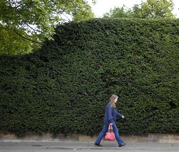 "Large hedges - like this one - are ""ruining lives"""