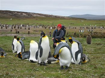PICK ME UP: Julie Odell with King penguins in the Falklands