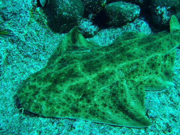 Aquarium welcomes divine new arrival deadline news for Baby sharks for fish tanks