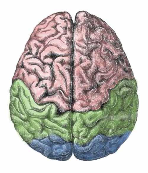 brain-use
