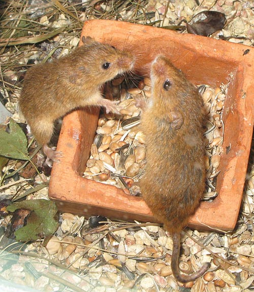 Pest Control Experts Battle Plague Of Mice And Rats Deadline News