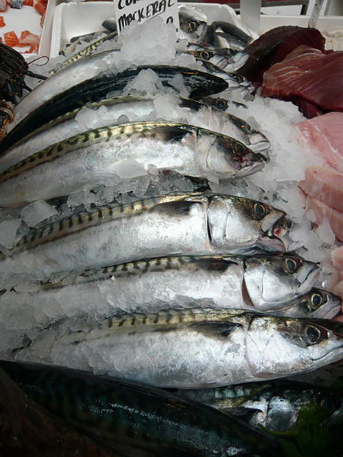 Mackerel is an abundant resource for Scots fishermen