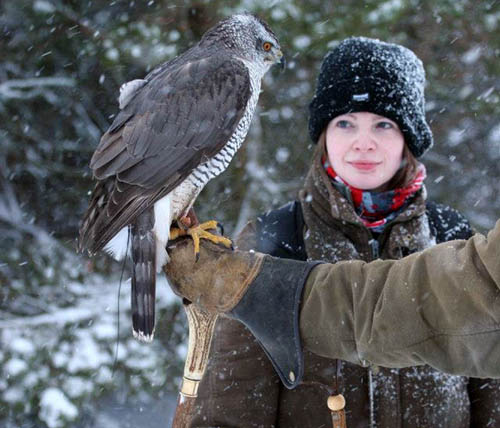 Meg the Goshawk prepares for take off just a few weeks after the horror accident