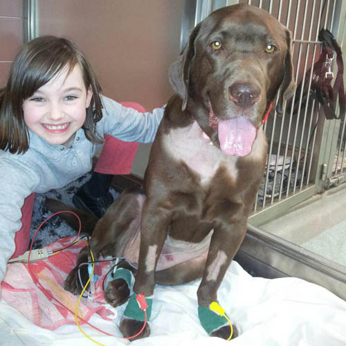 Katie with lucky lab Charlie after his successful operation