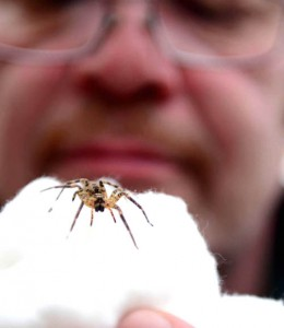 Wolf Spider found amongst grapes in couples homes