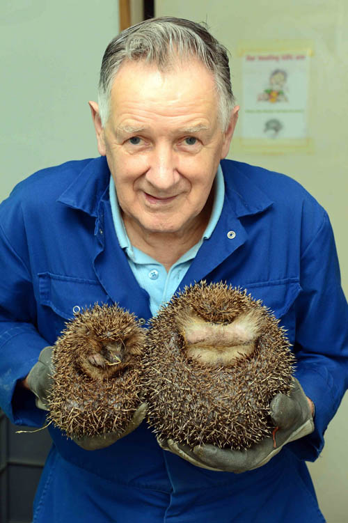 "Sandy Boyd shows off just how big Edinburgh is compared with a ""normal"" hedgehog"