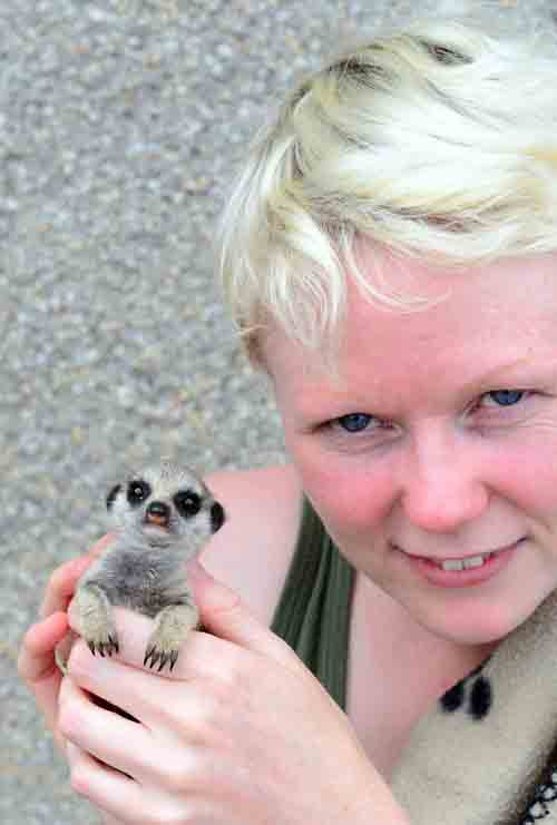 Nicky Lindsay started off feeding the baby meerkat with puppies' milk