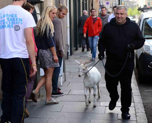 Alexa, with owner Dennis Rankine, turns heads in central Edinburgh