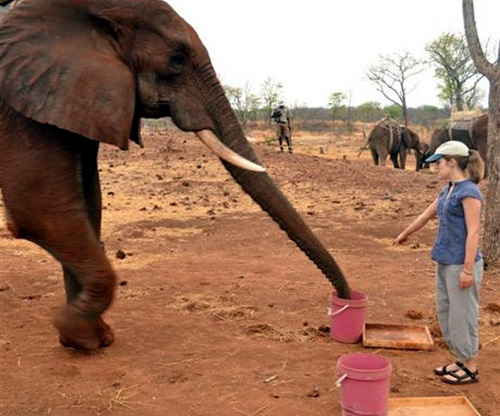 SCT_CLEVER_ELEPHANTS_DN01forweb