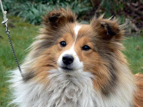 Stolen Fife show dog turns up in Kent