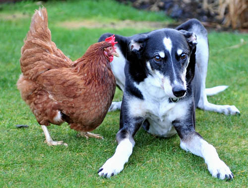 Colin and Maisie's unlikely friendship sparked up when she was saved from slaughter in 2012