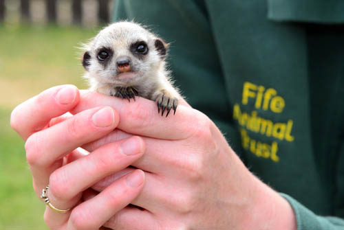 Some of the park's animals such as Ameera the meerkat have hit the headlines before for their star roles at the park