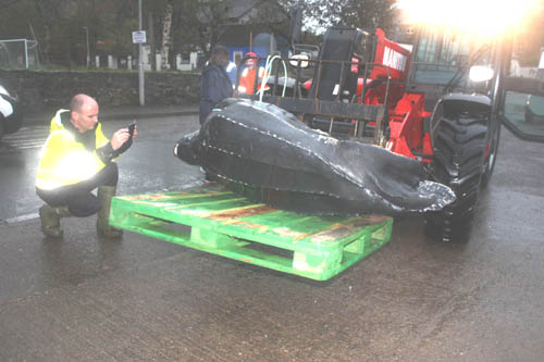 local fishermen were shocked to find the massive turtle as they were bringing the creels
