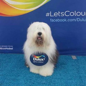 DN_Dulux_Dog_02