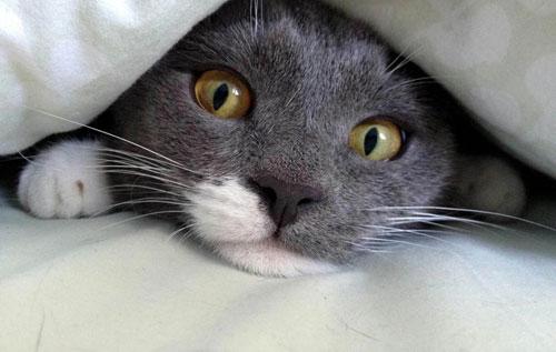 MOLE_SURVIVES_CAT_DN01