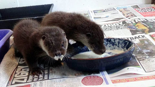 The pair, just 10 days old, were rescued in September