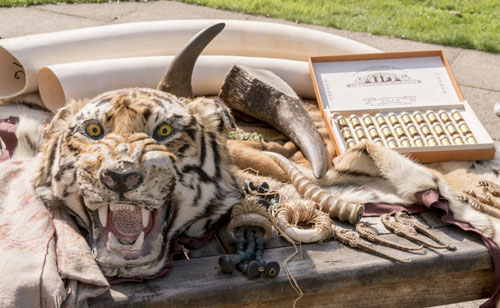 Seized-illigal-wildlife-tra