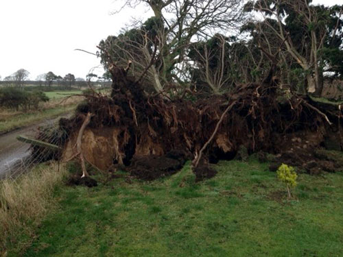 Trees were uprooted by the strong gusts