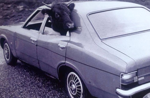 Farmer Donald Mackay was taking the animal to be sold