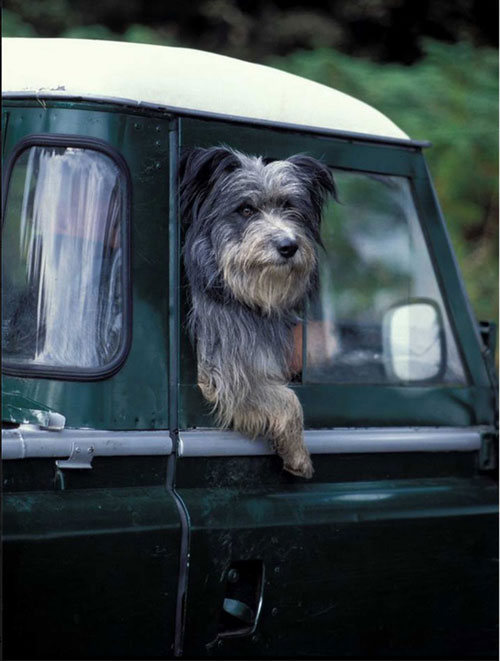 A dog taking in the view from the side of a van