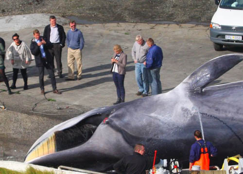 The beer has upset environmentalists who want an end to all killing of whales