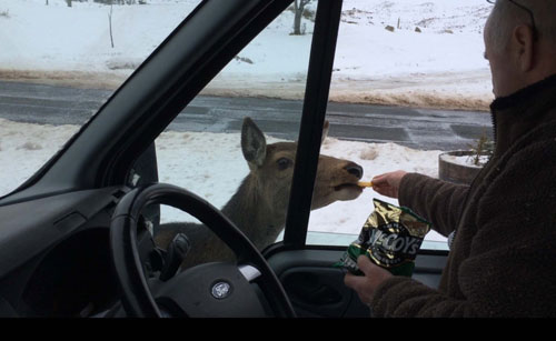 HUNGRY_DEER_DN10