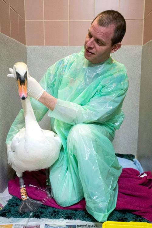 Vets at Edinburgh University treated the bird and established that it had suffered no serious injuries