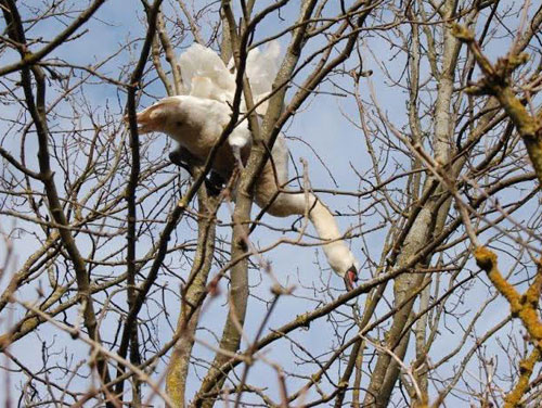 SWAN_TREE_RESCUE_DN_03-web