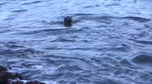The seal appeared to turn around as a final farewell