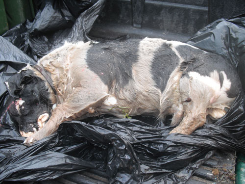 The dog was callously dumped in a canal