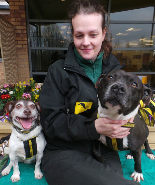 Rio and Sasha are the best of friends and would like to be rehomed together