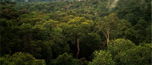 The study shows the true extent of damage to the rainforest