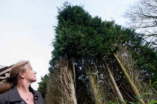 Ms Alexander says her neighbours have refused to trim the massive hedge