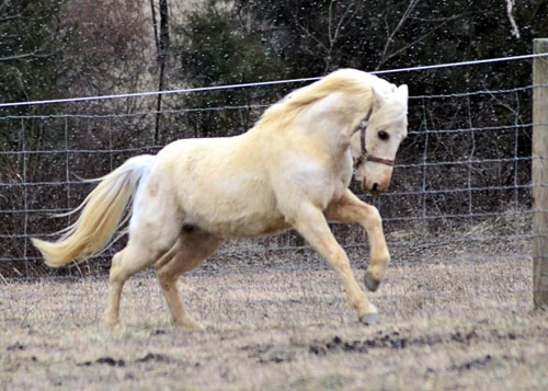 He rears, kicks and bites so much he has never been ridden