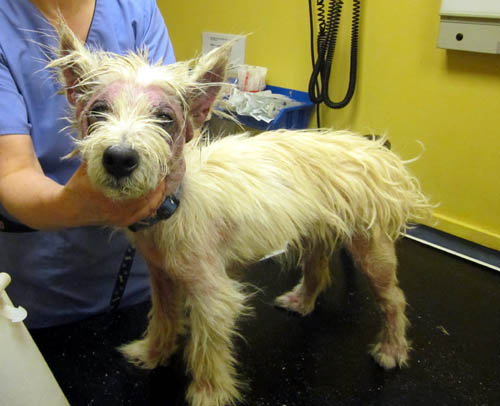 Yewster was in such a poor state, vets had no choice but euthanasia
