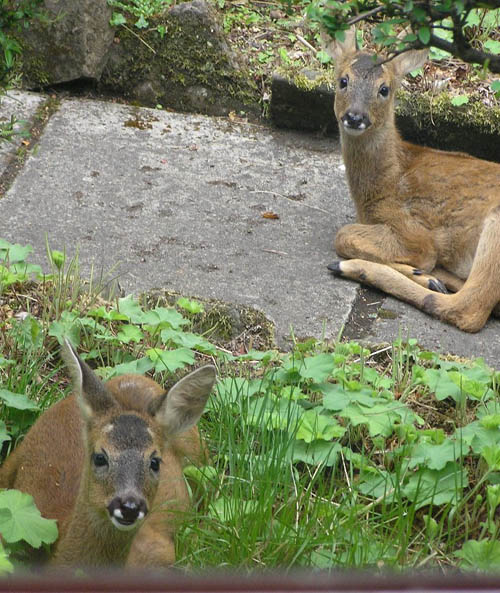 Brian and Hilary Eames snapped these visitors in their Perth garden