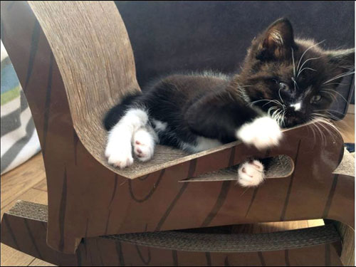 A small kitten enjoys playing on the rocking chair