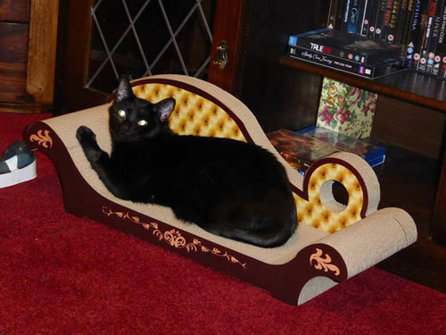 Cat furniture proves a big hit for moggy lovers deadline for Cat chaise longue