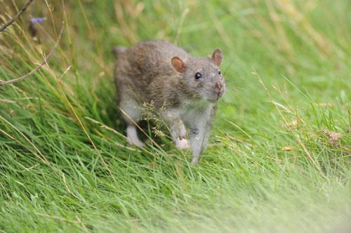 web-RUM_RATS_DN01