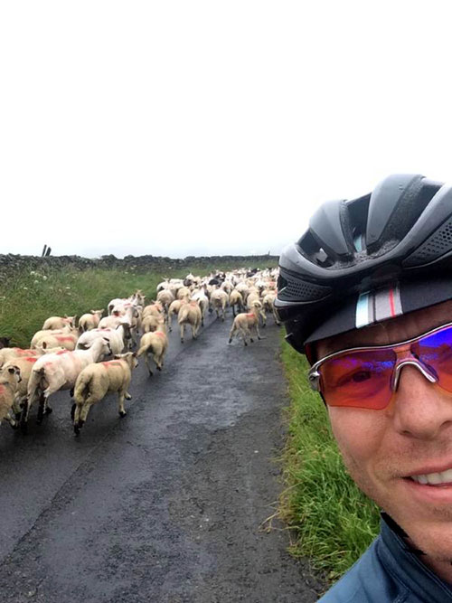 Sir Chris was stuck in a sheep traffic jam