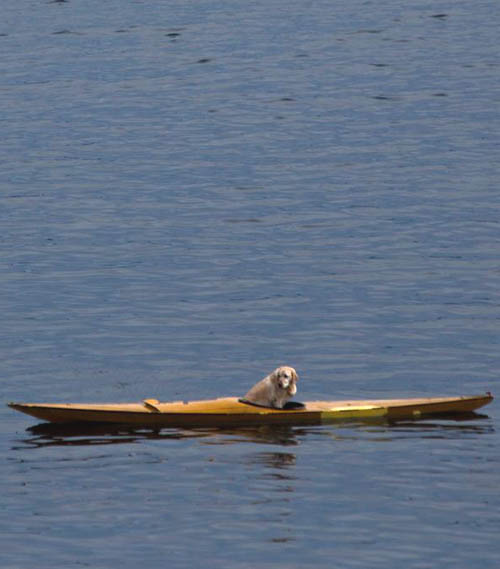 dog kayak