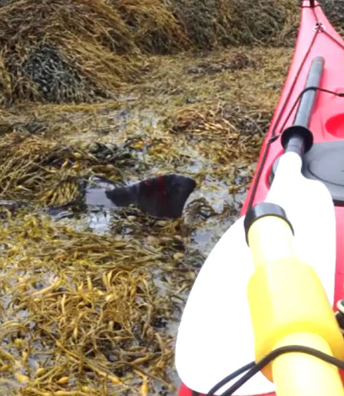 web-2-KAYAKERS_SAVE_DOLPHIN