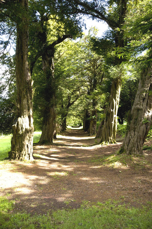 The castle comes with Scotland's oldest yew walk