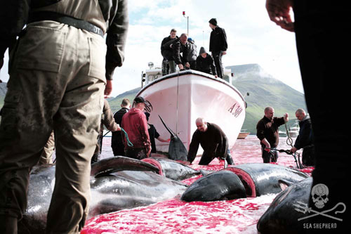 "The slaughter of whales has been called ""disgusting"""